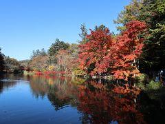 池の正面広場から。水面に映る紅葉がきれいです。
