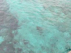 早速雨が降ってきた(涙)。きれいな海を横目に必死で漕ぎます。