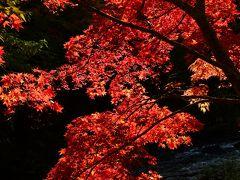 道中に興奮しすぎたせいか、中野もみじ山には大して感銘を受けなかった。それでも、午後の日を正面に受ける紅葉は見事で、撮影を試みた。