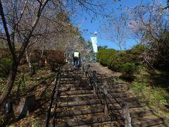 冬桜の間を城峯公園の展望台に上がります。
