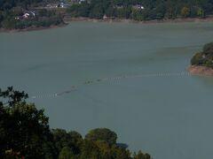 神流湖です。本庄市になります。 埼玉県の最北端で群馬県との県境にある。 神流川の下久保ダムによりできた湖で、かんな湖と読む。 神流町は群馬県の名前で、5月には鯉のぼり祭りがあり有名ですが、 今の時期も冬桜で有名だそうです。