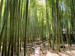 参拝料を払ってから入るのが竹林。晴れている日にお参りするのがベストですね。竹に囲まれた歩道を歩くだけで心が落ち着きます。