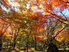11月4日 紅葉見頃!のこの日は 伊香保森林公園へ!
