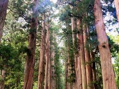 戸隠神社奥社への参道。