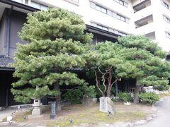 松乃碧は、松がシンボルなので、正面玄関にも宮家ゆかりの松含め、きれいに手入れされた松が出迎えてくれます。  車は当然ながらバレーパーキング対応。久しぶりのサービスで気分も高揚。