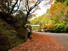 境内へと続く参道に落ちたもみじが 紅いじゅうたんのように 広がる風景が見どころの「八女津姫神社」