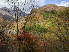 いろは坂の紅葉は見ごろを過ぎていましたが、時々きれいな紅葉を見ることができました。
