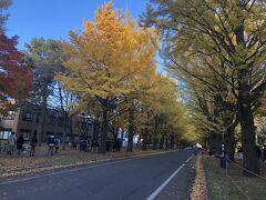 個人的には北海道の紅葉ってこんな黄色いイメ-ジが強いです。