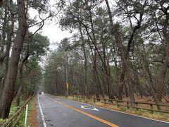 国の特別名勝「虹の松原」。100万本の松を植えた長さ4.5㎞の松原。