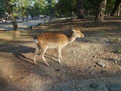 奈良公園にやってきました。