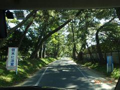 旧東海道の御油の松並木を通ってみました