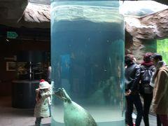 旭山動物園内のアザラシ館へ