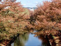 ここね桜の名所だから紅葉を期待して来てみた