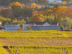 横瀬駅から徒歩20分程で寺坂棚田に到着。 夕陽に照らされた棚田と紅葉と三菱マテリアル工場。