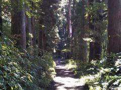 旧街道の杉並木を歩いて恩賜箱根公園へ。
