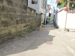 <日間賀島> 港は諦め、西里集落に入っていくと、ようやく第一猫発見。