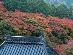 お参りをした後に裏の飯盛山へ上がってみます。遠くから見ると紅葉しています