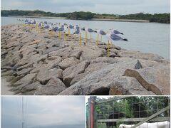 <佐久島> ということで、三年前、2017年10月の佐久島の猫さんを投入。 https://sakushima.com 佐久島も三河湾に浮かぶ離島ですが、名古屋方面からは、 名鉄の西尾駅まで移動し、バスで一色さかな広場まで、 一色港から渡船で佐久島東港または西港。 近年、アートなどの島おこしに力を入れておられるようです。
