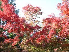 紅葉谷公園にはすでに赤いモミジもありました