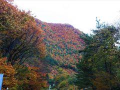 本日最初のドライブ休憩は、道の駅たじま。 時刻は朝8時ころ。 トイレ休憩だけのつもりだったのだが、周囲を取り囲む山が見事に紅葉していて、思わず足を止めてその紅葉に見入ってしまう。  天気予報によれば、朝から秋晴れの良い天気の筈だったのだが、空には雲。 これからの天気がどうなるのかちょっと不安を感じさせる空色だ。  道の駅では野菜の直売が始まっていて朝からお客さんがたくさん。 私も見るだけのつもりで立ち寄ったのに、大好きなリンゴのシナノスイートが大玉なのに6個550円と格安で販売されているのを見つけてしまい、思わず衝動買い。  林檎はこの時期が旬。 今食べなくって、いつ食べるの?と自分自身に言い訳しながらのお買い物だ。