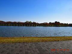 小合溜対岸は三郷市のみさと公園。