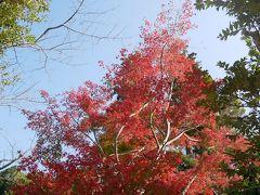 駅すぐの円覚寺 駐車場の紅葉が見事で