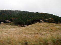 途中、仙石原のススキを見に行こうかと思っていましたが、雨が降ってきたことと、観光客の混雑に消極的になり、通過するのみとしました。 車の中からでもキレイでした。
