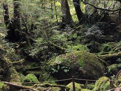 苔むす森に到着しました。  デジカメで撮影すると、どうしても綺麗すぎる緑色になります。 なかなか、調整ができず、悩んでおりましたが・・   iPhoneで撮影すると、写真が撮れました。