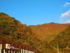 10月の土曜日、日帰りで紅葉狩りへ出発♪ 神奈川の自宅から苗場を目指して車を走らせると、山の色がどんどん変わっていくのがよくわかりました。途中に寄った谷川岳パーキングエリアからの景色はもうすっかり秋色!