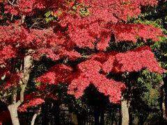 SAでも紅葉を楽しめますね。 ということは、目的地の白石・鎌先温泉辺りは紅葉は終わっているだろうな・・・。
