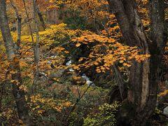 水源の森でのハイキングを終え、再び照葉峡へ
