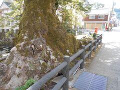 ちょうど木の根も この小さな川をまたいでいるところから付けられた名前です