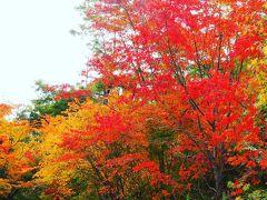 黒川温泉 山あいの宿 山みず木