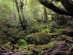 再び、苔むす森。  帰りは、横向きの写真でうまく撮影できました。