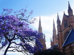 シドニーの歴史的建築とジャカランダを撮りにシドニーの観光名所を廻ります。近くのSt Mary's教会にもジャカランダが。