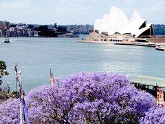 シドニーで1番の観光名所オペラハウスとジャカランダ。これはサーキュラーキー駅の上から撮った写真です。