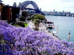 別の角度からハーバーブリッジを望みます。ジャカランダはシドニーどこにでもありオーストラリアを代表する花というのが分かると思います。桜の時期に日本中がピンクになるのと同じで、11月は全国が紫に染まります。