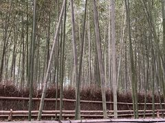 嵯峨嵐山駅まで、竹林の道を通りました。若い人がたくさん。