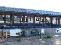 宇治公園内には、鵜飼の鵜が自由に見学出来る小屋がありました。