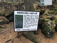 根がすごい
