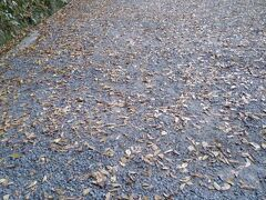 落葉している忍者博物館へ向かう道。