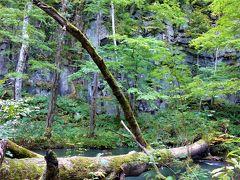 屏風岩。  横たわる木も危なくない限りそのままにしておくのがルールだそう。