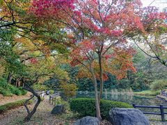 15時前に横浜市児童遊園地到着。 北側の入り口より入り、広場を抜けると池があります。 池の周りの木々も色づいてます。