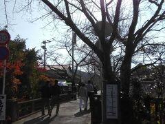 この「杉の馬場通り(登城道)」をまっすぐ行くと、秋月城跡に着きます。