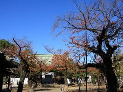 桜はだいぶ落葉していました。