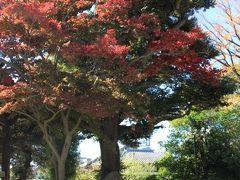 かさね塚の傍らのモミジは紅葉が綺麗でした。 歌舞伎「色彩間苅豆」の題材となった怪談の主人公「累」の塚です。 祐天上人が累(かさね)という女性の怨霊を成仏得脱させた伝説は、歌舞伎をはじめとするさまざまな芸能作品の題材となりました。このかさね塚は、累物舞踊の1つである『色彩間苅豆』(4代目「鶴屋南北」作『法懸松成田利剣』の一幕)が復活上演され好評を博したことを記念して、大正15年(1926)に6世尾上梅幸、15世市村羽左衛門、5世清元延寿太夫らによって建立されたものです。 塚には法蔵寺(茨城県)にある累一族のお墓の土が分祀されています。