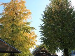 駒沢通りと山手通りの交差点に位置する正覚寺。 境内のイチョウの大木の1本は黄葉していました。