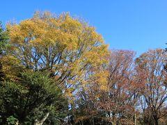 世田谷公園は、東京都世田谷区池尻一丁目にある都市公園です。