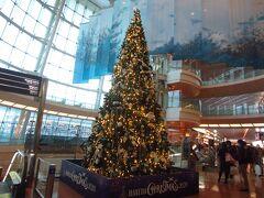 羽田空港第2ビルのクリスマスツリーです。早いもので、もうクリスマス。いつもなら、舞浜駅を行きかう人が11月に入るとクリスマスのイラストのショッピングバックに替わるので季節を感じてたのに。