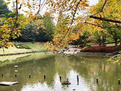 そして、臼井地区で一番紅葉がきれいなのは、ここ、七井戸公園